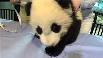 Bao Bao's first selfie