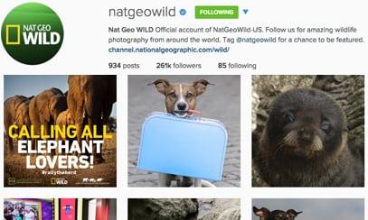 natgeowild