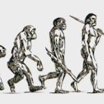 Evolution_stock