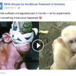 Britches rescued monkey FB post