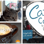 cat cafe, purina ONE, cat, adoption, cat capuccino