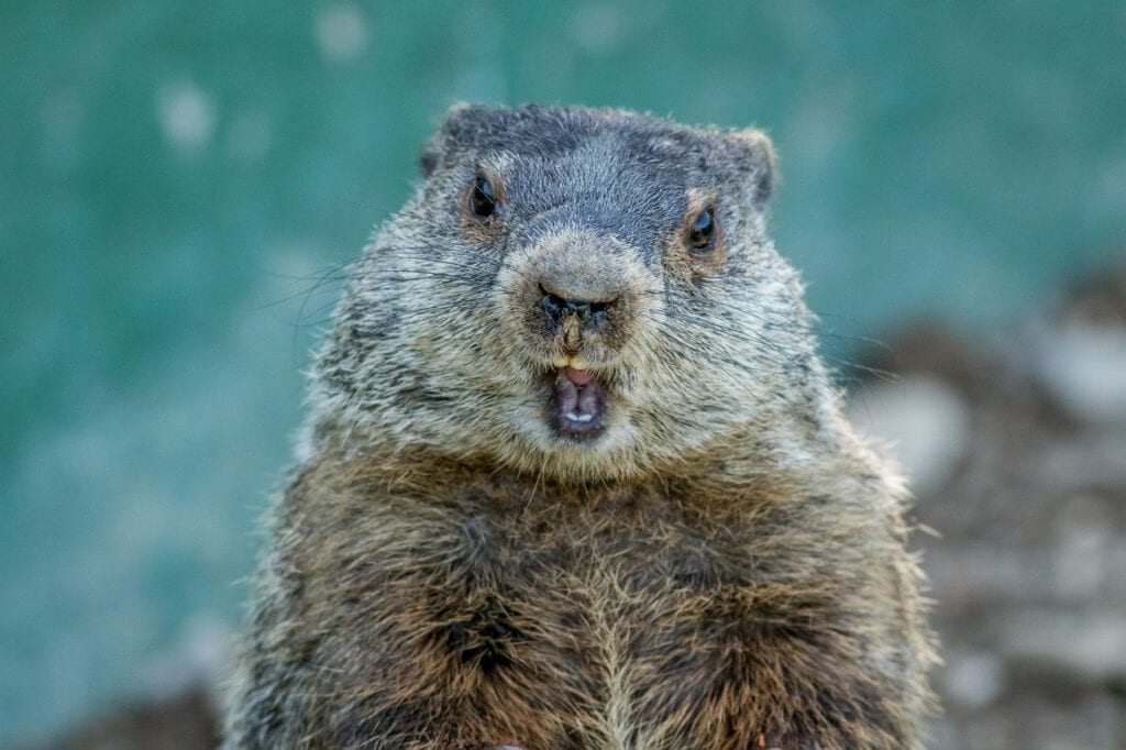 Brands Look to Avoid Their Own Groundhog Day